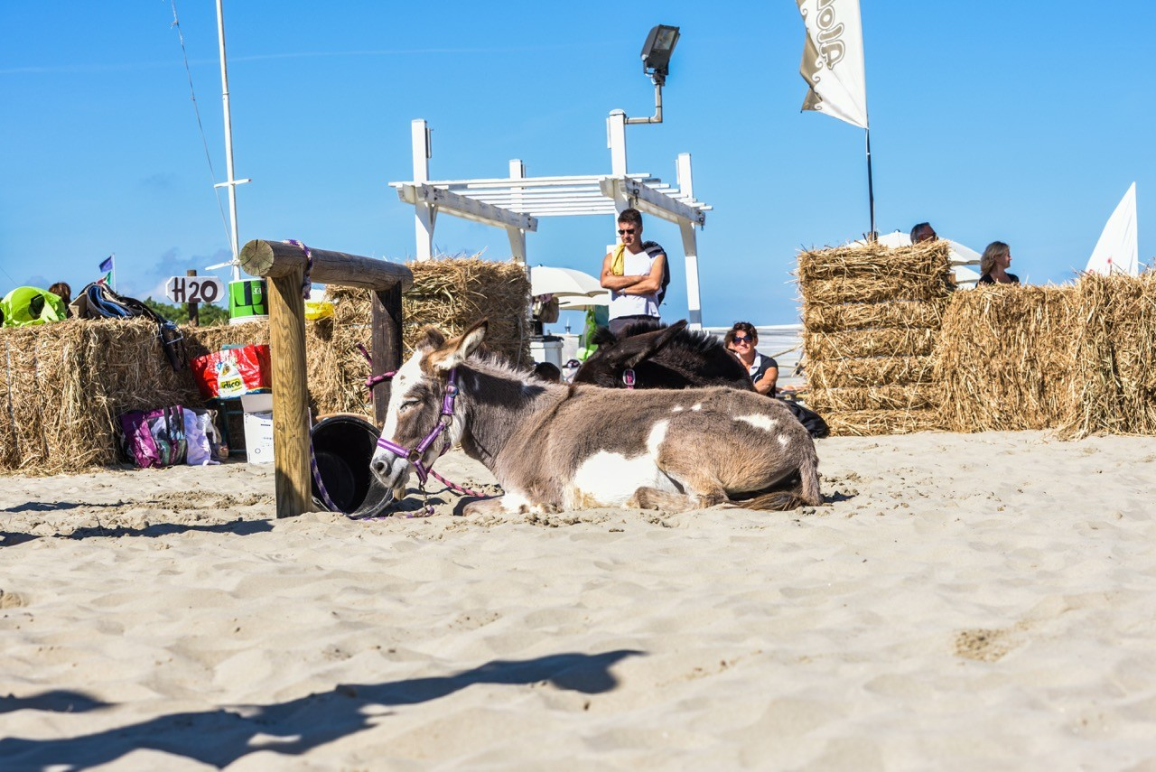 Horseback riding by the sea in Ravenna  equestrian events on the ... e55f9b38f724